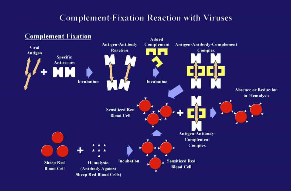 Complement Fixation Test - Principle, Components, Procedure, Advantages, Disadvantages